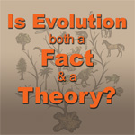 Why-Evolution-image
